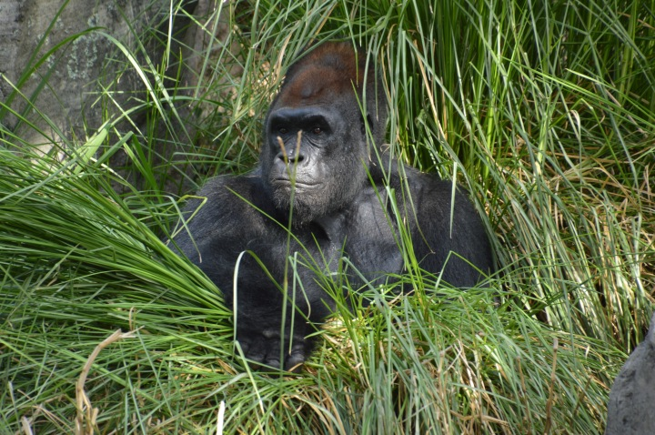 houston-zoo