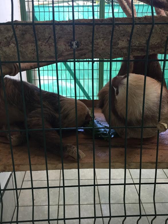 sloths 1.JPG